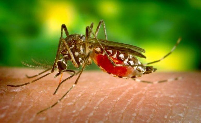 Denuncian nuevo brote de paludismo en comunidades indígenas
