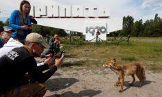 Animales regresan a una Chernobyl abandonada