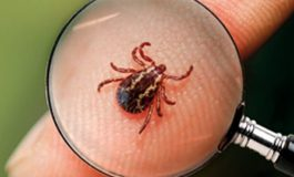 A cuidarse de la enfermedad de Lyme, por Dr. Carlos G. Cruz H.