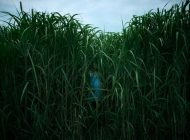 In The Tall Grass, de Netflix, inaugurará el Festival de Sitges