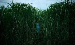 In The Tall Grass, de Netflix, inaugurará el Festival de Sitges