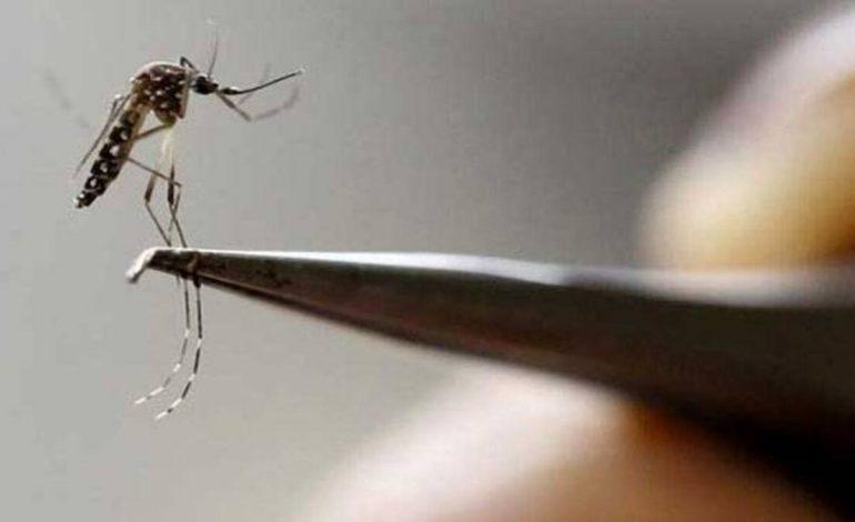 Alerta en Florida por dos casos de dengue