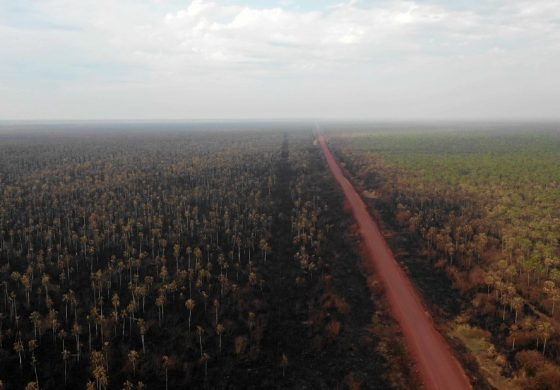 Asma, rinitis y otros problemas asociados al incendio del Amazonas