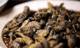 "Inauguran en Sudáfrica restaurante especializado en comida ""gourmet"" con insectos"