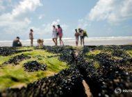 Brasil asegura que el petróleo en sus playas es venezolano, pero la causa sigue siendo incierta