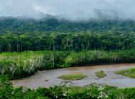 Deforestación de la Amazonia brasilera se ha duplicado este año