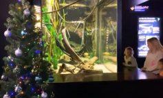 Una anguila eléctrica enciende arbolito  en Estados Unidos