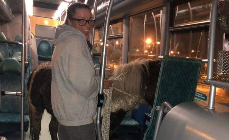 Caballo británico toma el autobús para volver a casa