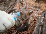 Las tormentas extinguen los incendios del este de Australia