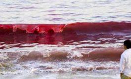 La tóxica marea roja la muerte silenciosa que atacó las costas de Florida en el 2019