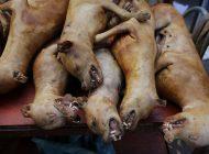 Ciudad china prohibió la venta de perros y gatos para consumo humano por brotes de covid-19