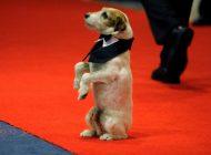 Uggie es coronado como el mejor perro de película en Cannes