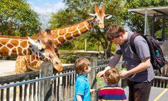 Zoo de Miami reabre sus puertas con nuevas normativas