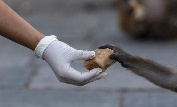ONG solicitó cierre de mercado de animales en Asia