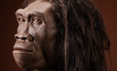 Así era realmente el Homo Erectus, no era ni delgado, ni esbelto